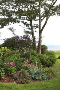 phlox peony garden
